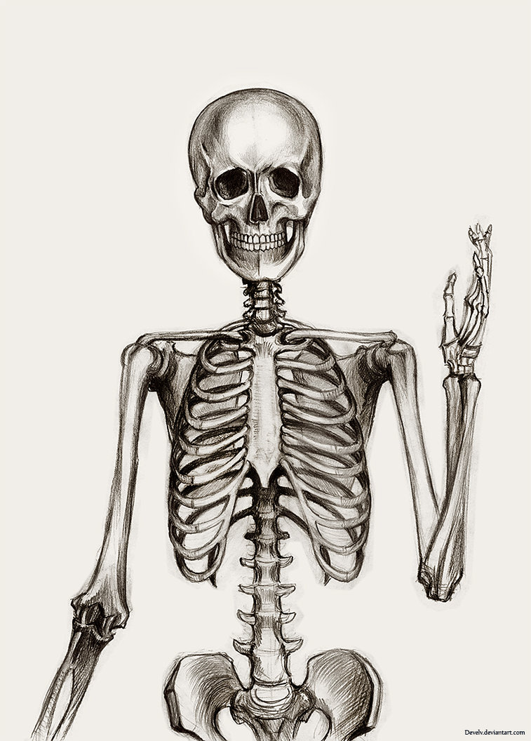 Skeleton Drawing at GetDrawings.com | Free for personal use Skeleton ...