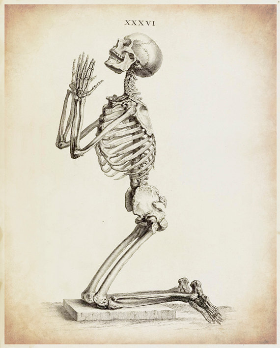 570x708 Skeleton Art Skeleton Drawing Antique Medical Antique