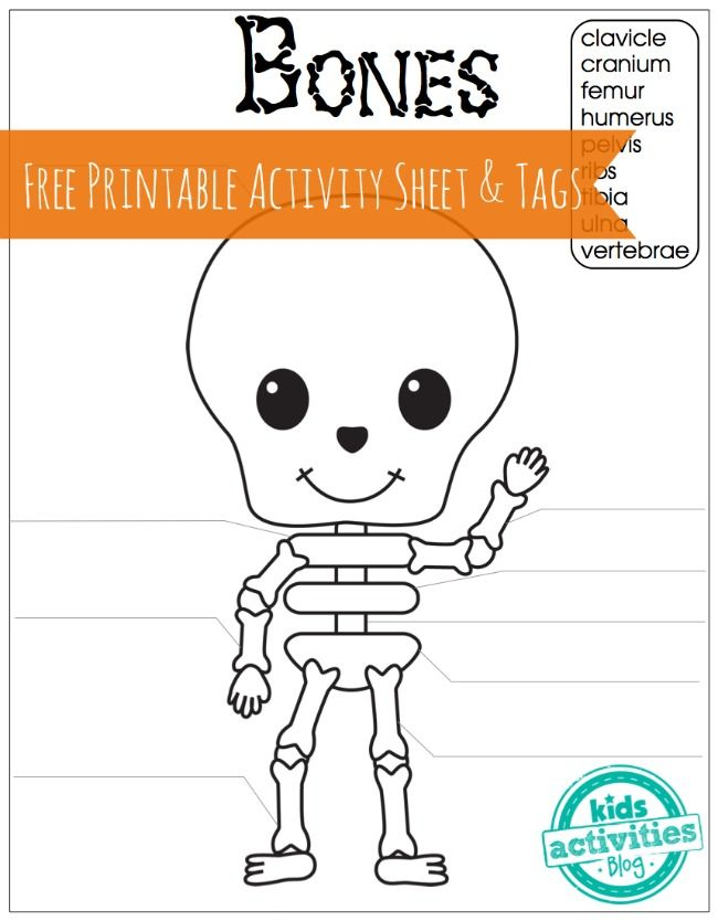 650x834 7 best halloween images on pinterest day care fall crafts and - Skeleton Worksheet
