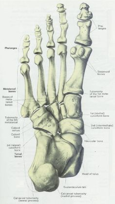 236x416 Skeleton Feet Foot Bonesp View Your Foot Is Quite Easy