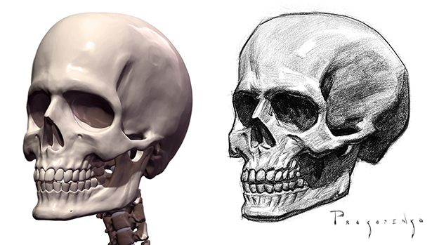 625x349 How To Draw A Skull