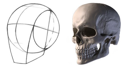550x284 How To Draw The Head From Any Angle Proko