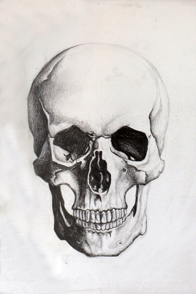 400x600 Pictures Skeleton Head Sketch,