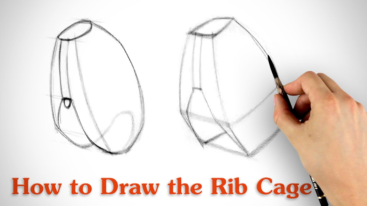 1280x720 How To Draw The Rib Cage