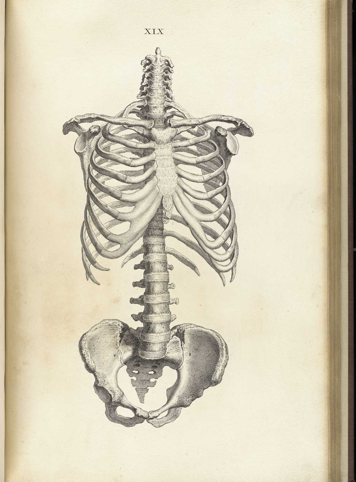 1200x1625 William Cheselden Osteographia, Or The Anatomy Of The Bones (1733