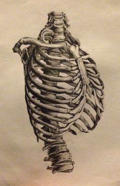 236x365 Rib Cage Drawing Inspiration. Rib Cage, Anatomy