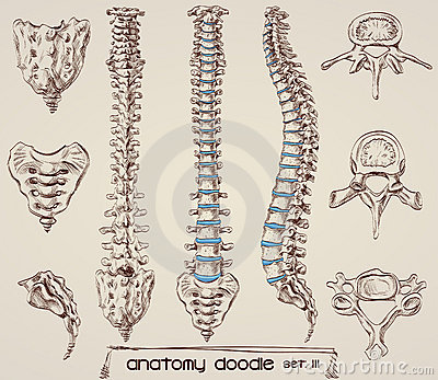 how to draw human bones