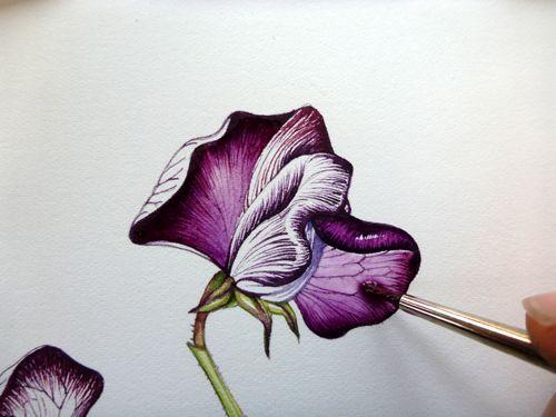 500x375 52 Best 3 Botanical Sketchbooks Images On Drawing
