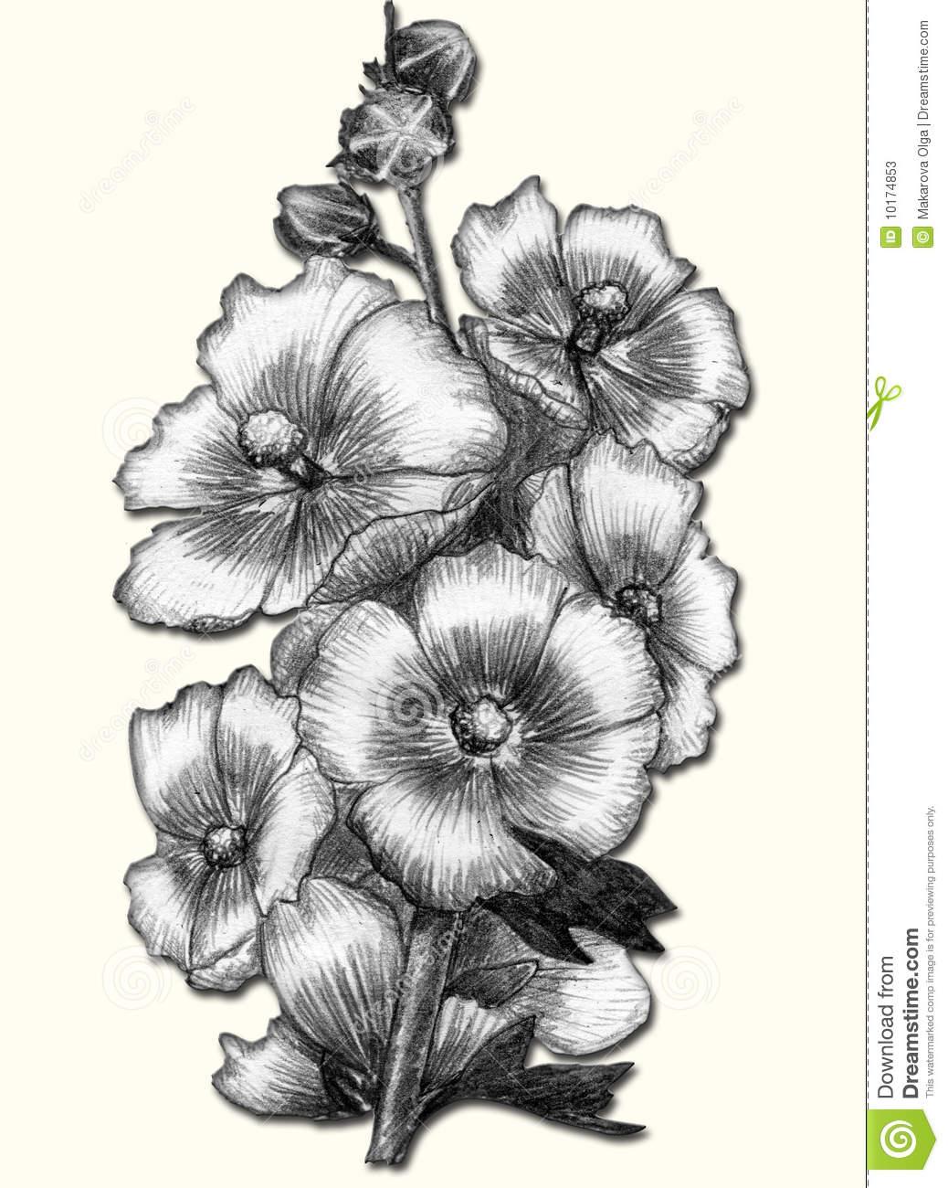 1038x1300 Beautiful Flower Pencil Drawings