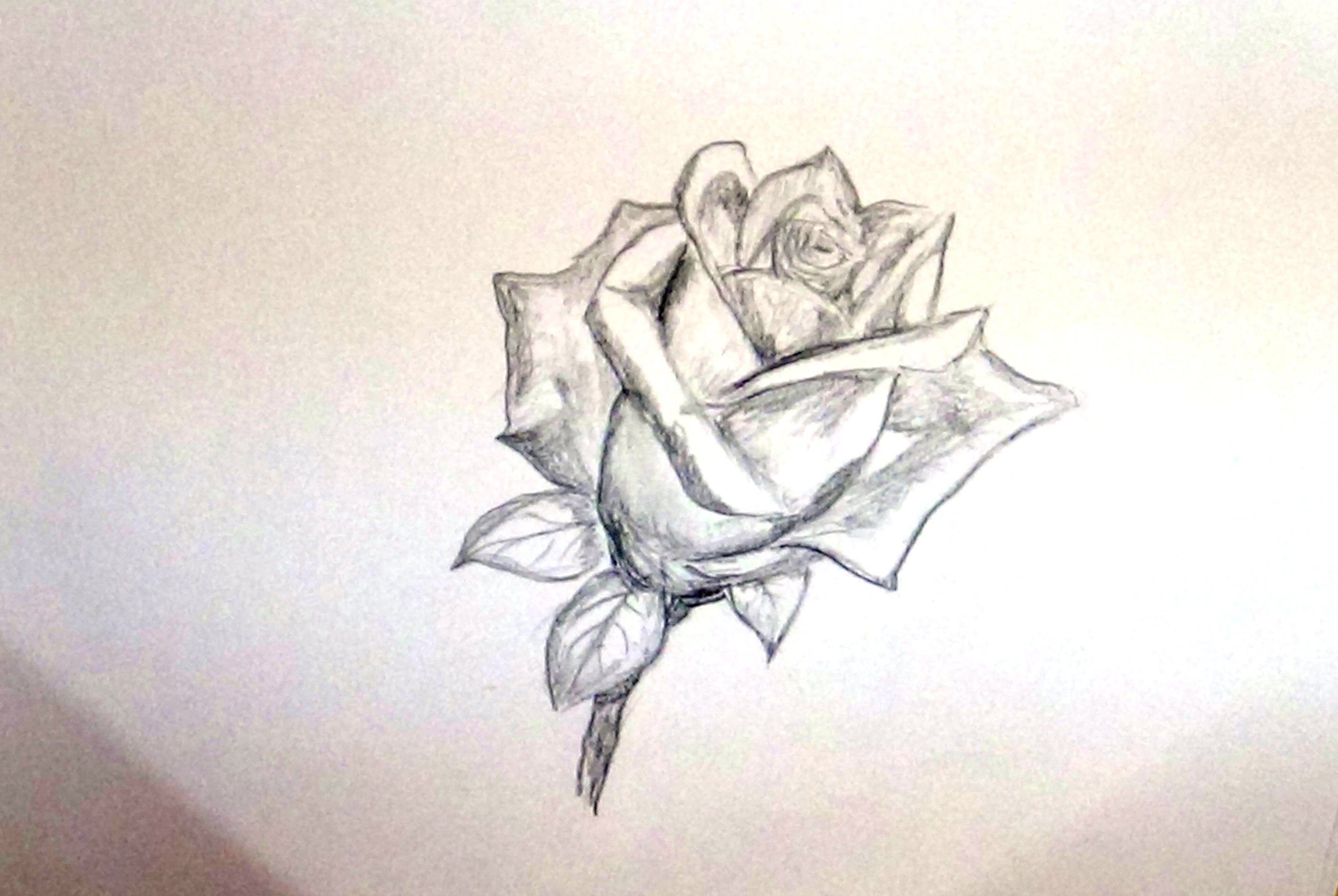 2840x1903 Drawing Flowers For Beginners How To Draw Rose Flower Sketch