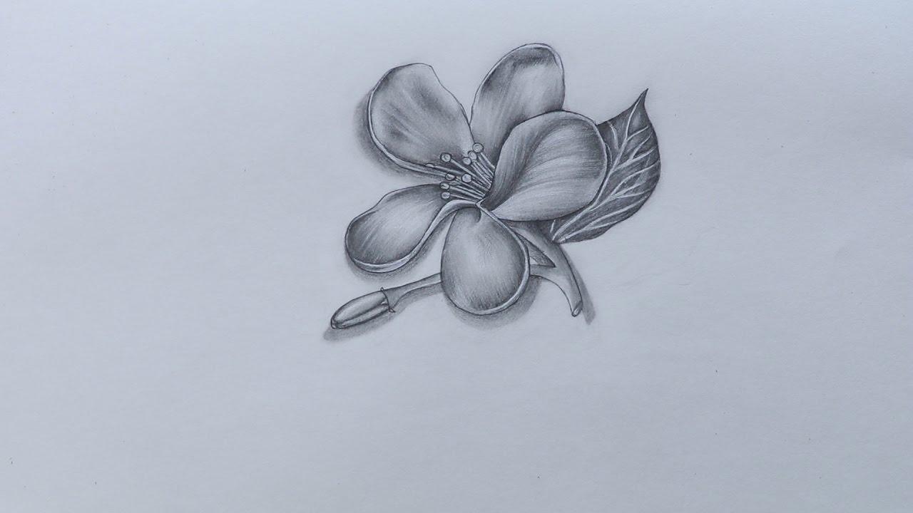 1280x720 How To Sketch Jasmine Flower