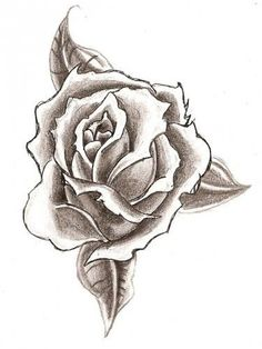 236x314 Black And White Rose Pics Rose Drawings Black White 5 Drawing