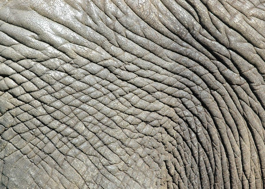 900x643 Elephant skin background Animal Skin Backgrounds With Different