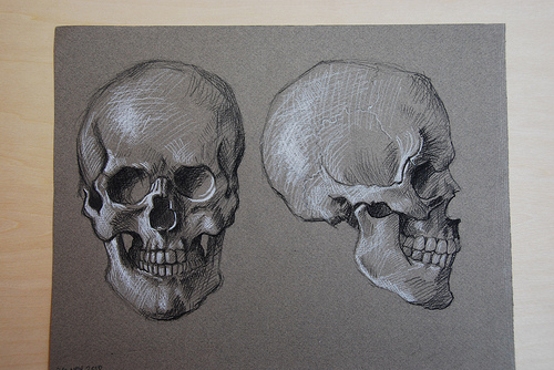 500x334 Anatomy Drawings The Skull And Its Muscles Elizabeth Floyd