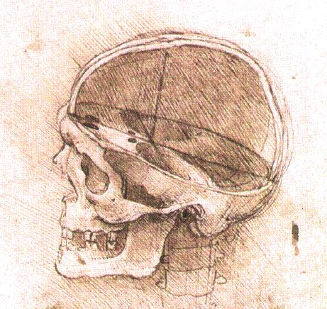 461x436 Skull Anatomy For Artists Drawn In Black