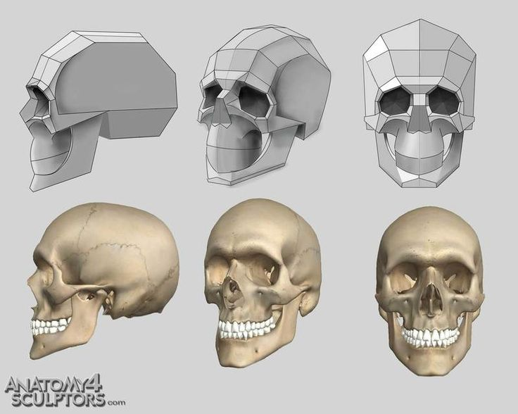 Skull Drawing Reference At Getdrawings Free For Personal Use