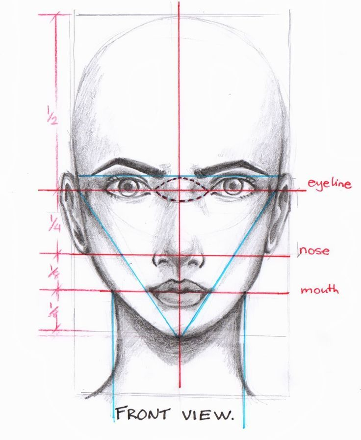 736x896 Head Amp Face Amp Skull 8 Neuzen Face, Drawings