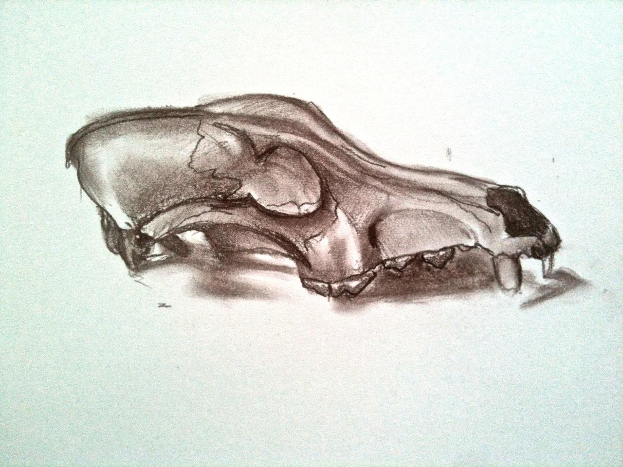 1280x960 Dog Skull Drawing 1 Janet E Davis Art