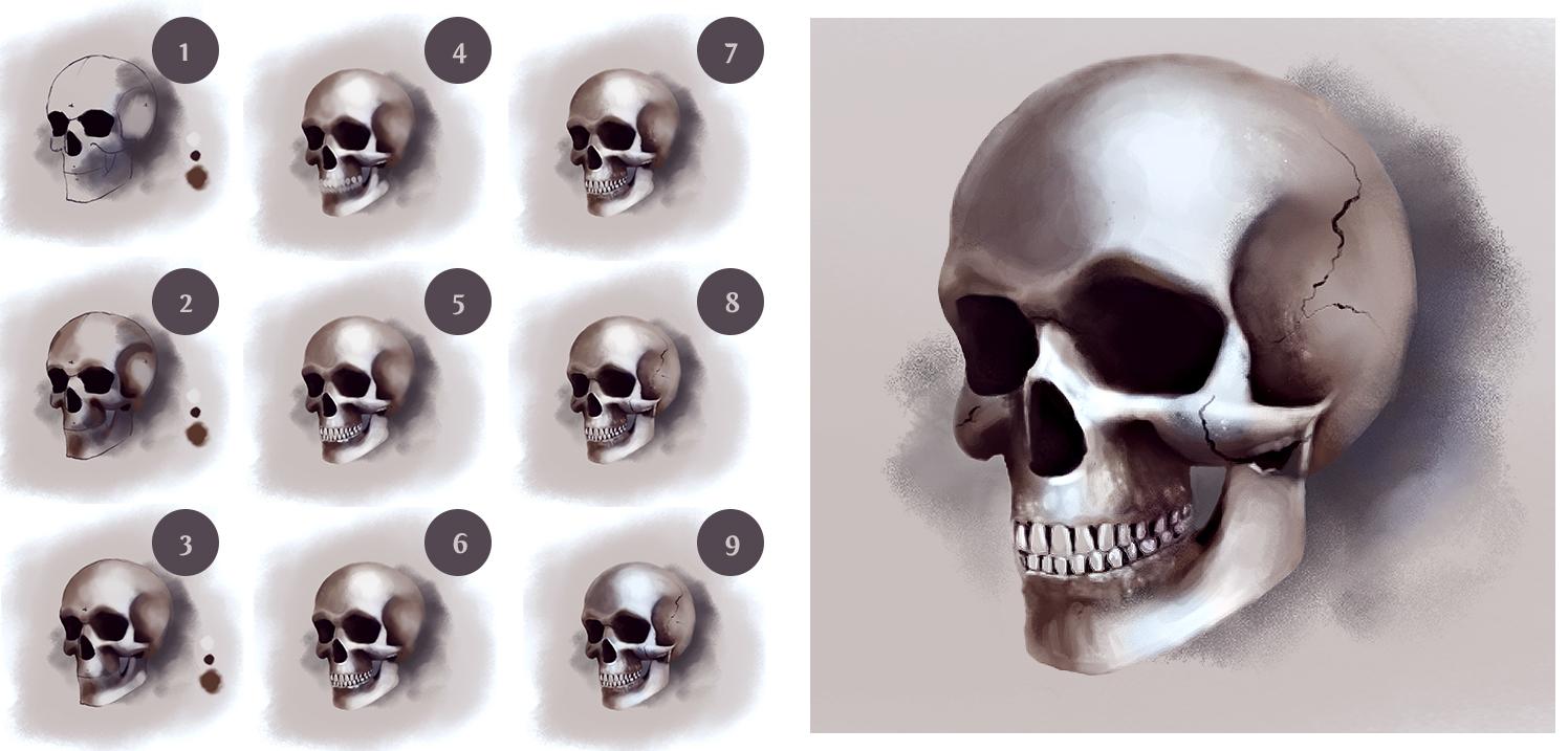 1496x717 Anatomy Basics How To Draw A Skull Arid Glamor