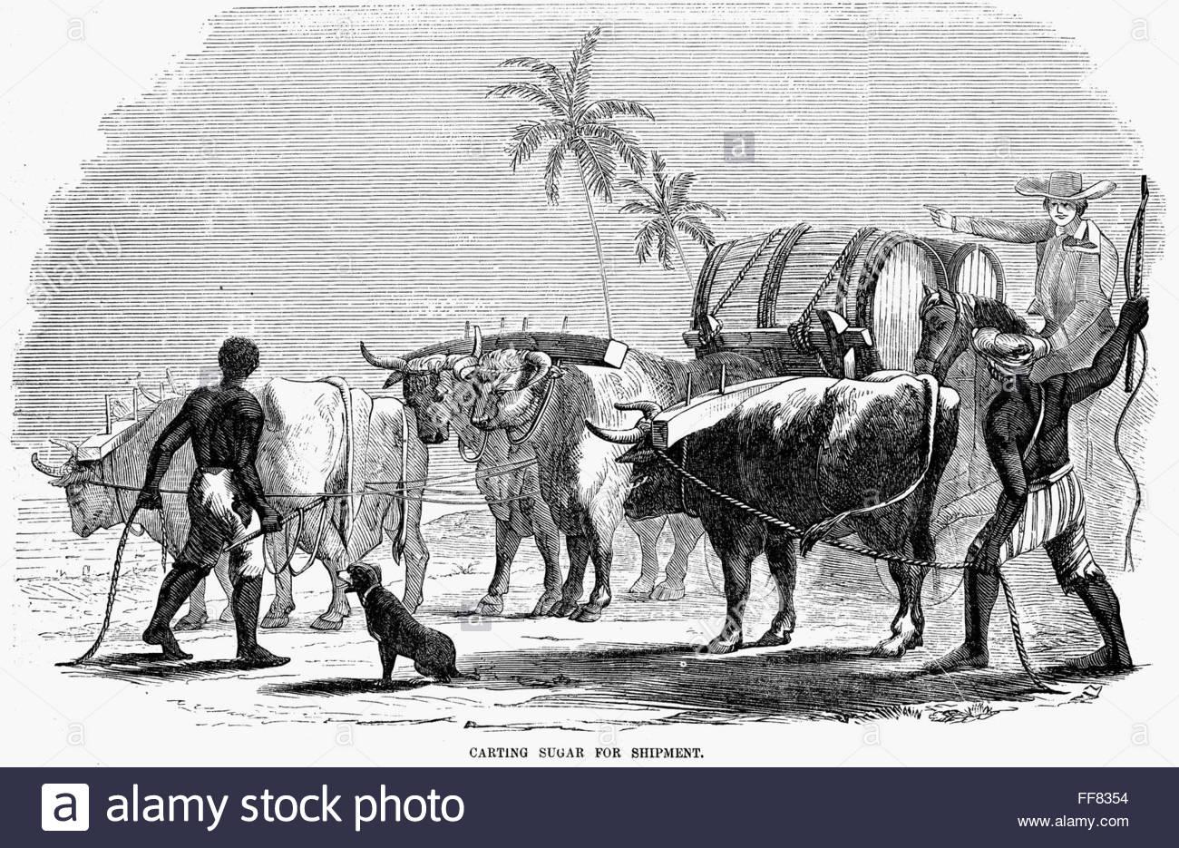1300x935 Slavery West Indies. N'Carting Sugar For Shipment.' Slaves