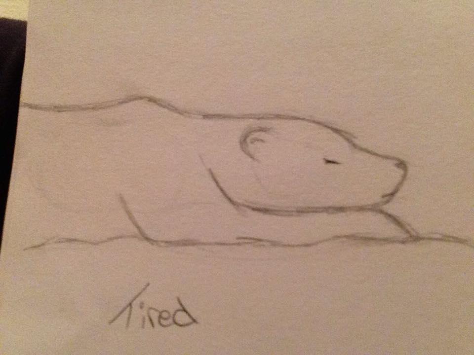 960x720 Drawing, Sleeping Polar Bear By Moving Accounts