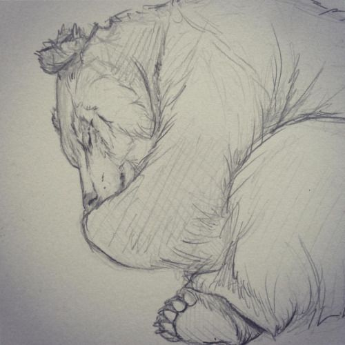 500x500 Quick Sketch Of A Sleeping