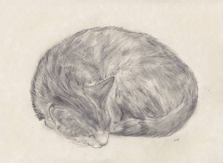 770x562 Saatchi Art Sleeping Cat Drawing By Jeffrey Yount