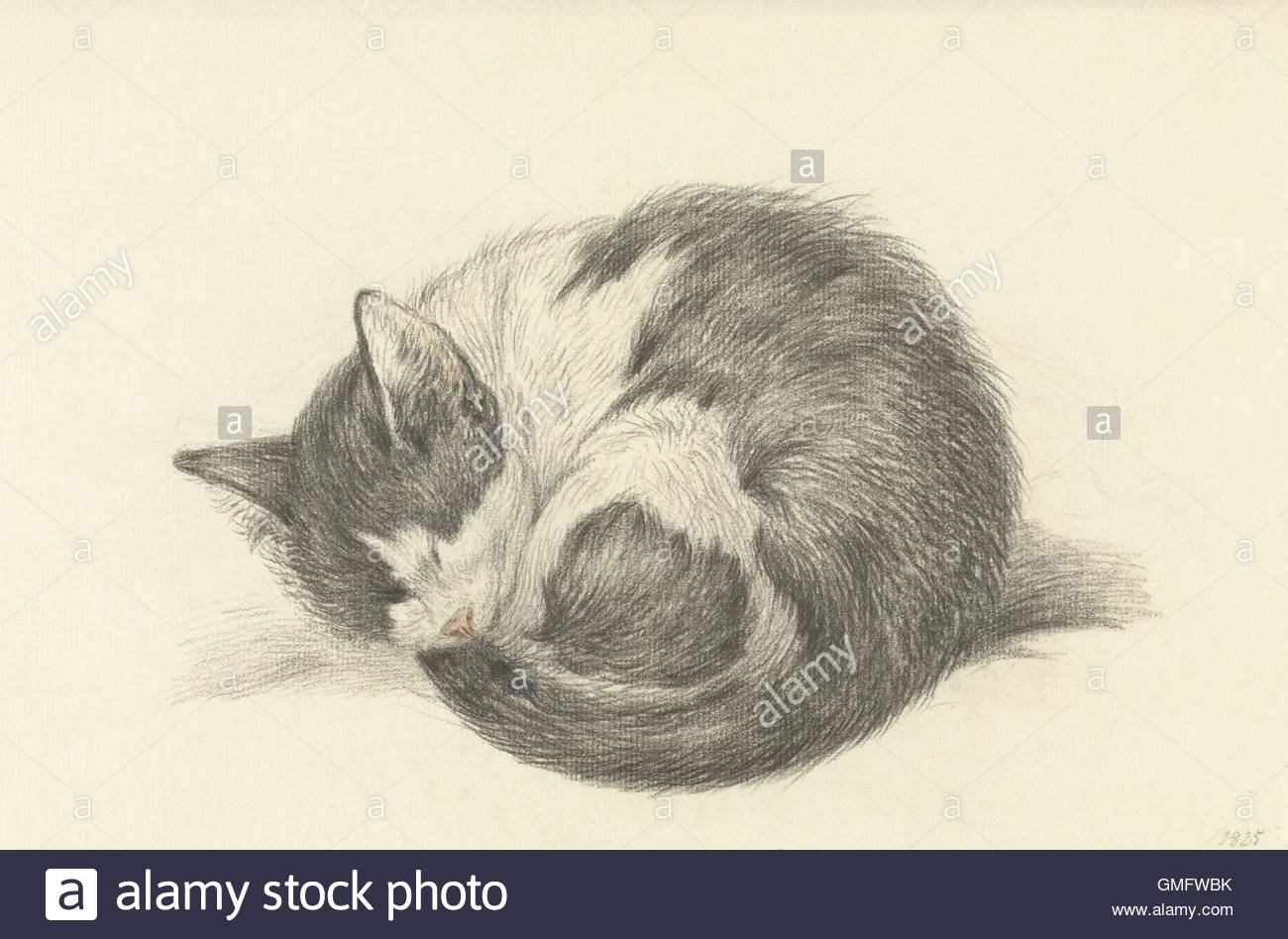 1300x948 Sleeping Cat Rolled Into A Ball, By Jean Bernard, 1825, Dutch