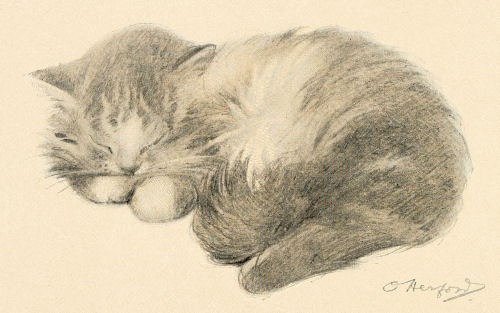 500x313 Sleeping Kitty Drawing