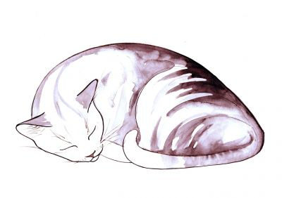 400x282 Sleeping Cat Drawingsleeping Cat Print 4