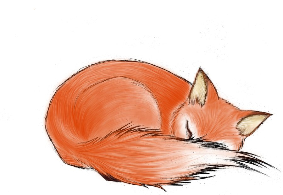 Coloring Pages Of Sleeping Animals : Sleeping fox drawing at getdrawings.com free for personal use