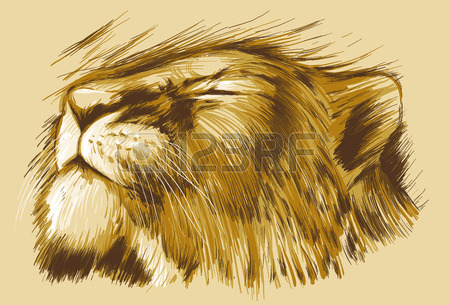 Coloring Pages Of Sleeping Animals : Sleeping lion drawing at getdrawings.com free for personal use