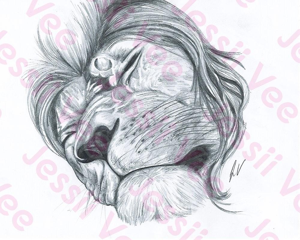 1000x800 sleeping lion pencil drawing jessii vee merch