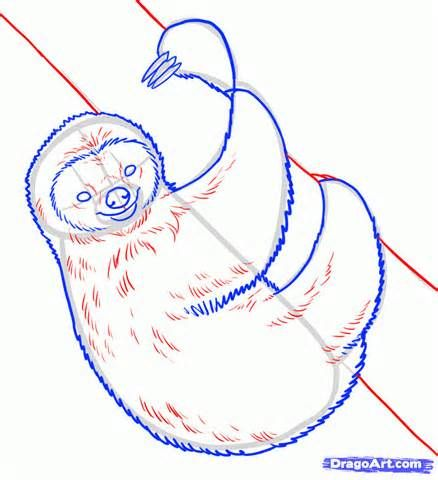 438x480 49 Best Drawing Sloths Images On Sloth, Sloths