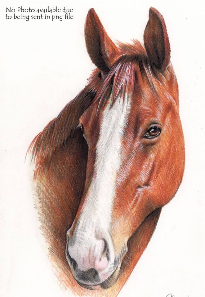 661x958 Small Horse Drawing Commission Hand Drawn Portraits