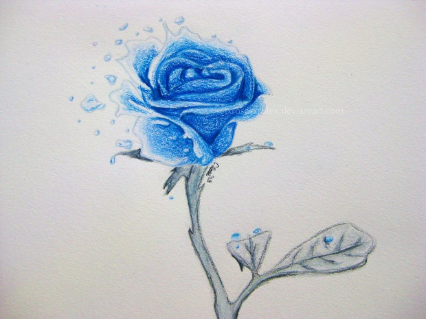 620x465 Rose Drawings , Sketches Design Trends