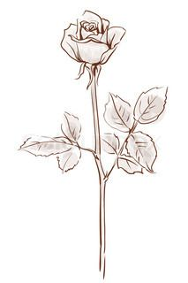 213x320 Rose Drawing Single Flower Outline Tattoo Stencil Just Free
