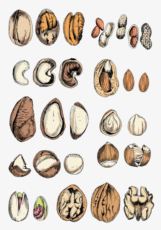 560x800 Cartoon Nuts, Hand Painted Berries, Snacks, Drawing Berry Png