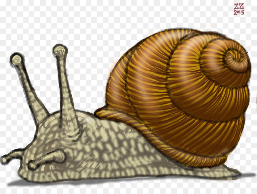 900x680 Gastropods Land Snail Drawing Slug