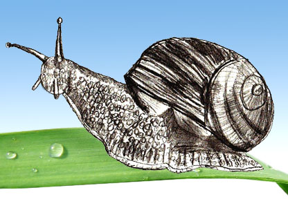 416x288 How To Draw A Snail
