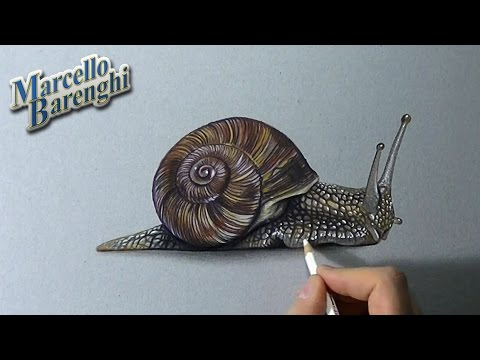 480x360 How To Draw A 3d Snail