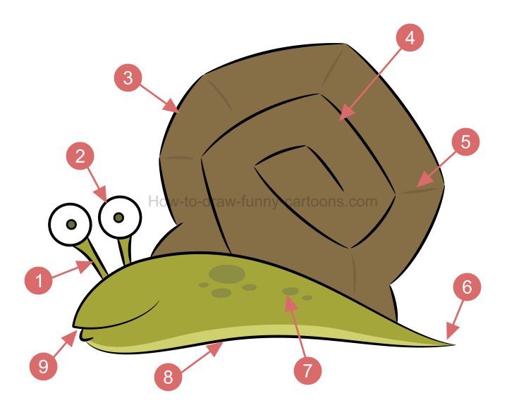 746x575 To Create A Snail Drawing