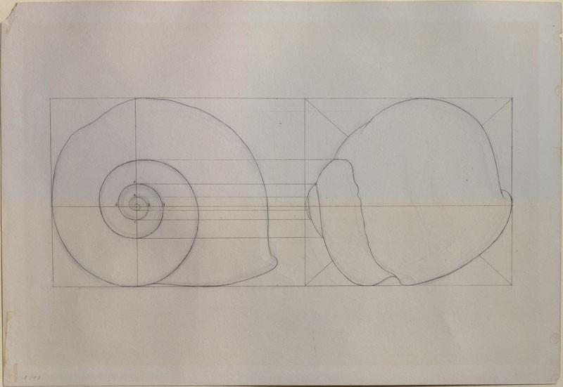 800x551 Ashmolean The Elements Of Drawing, John Ruskin's Teaching