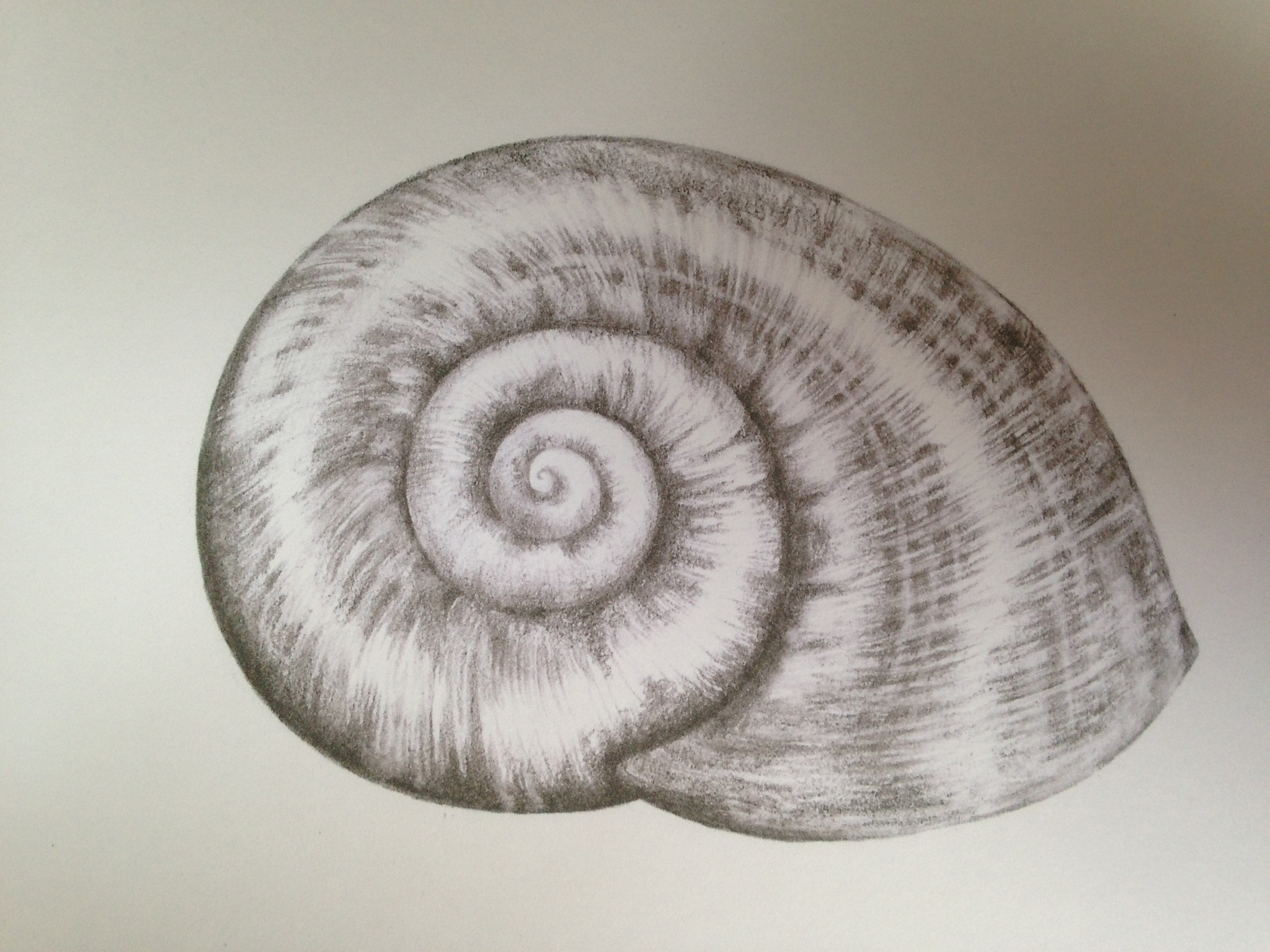 2048x1536 Shell Pencil Drawing Drawn Shell Snail Shell