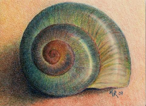 480x349 Snail Shell Drawing By Mary Rogers