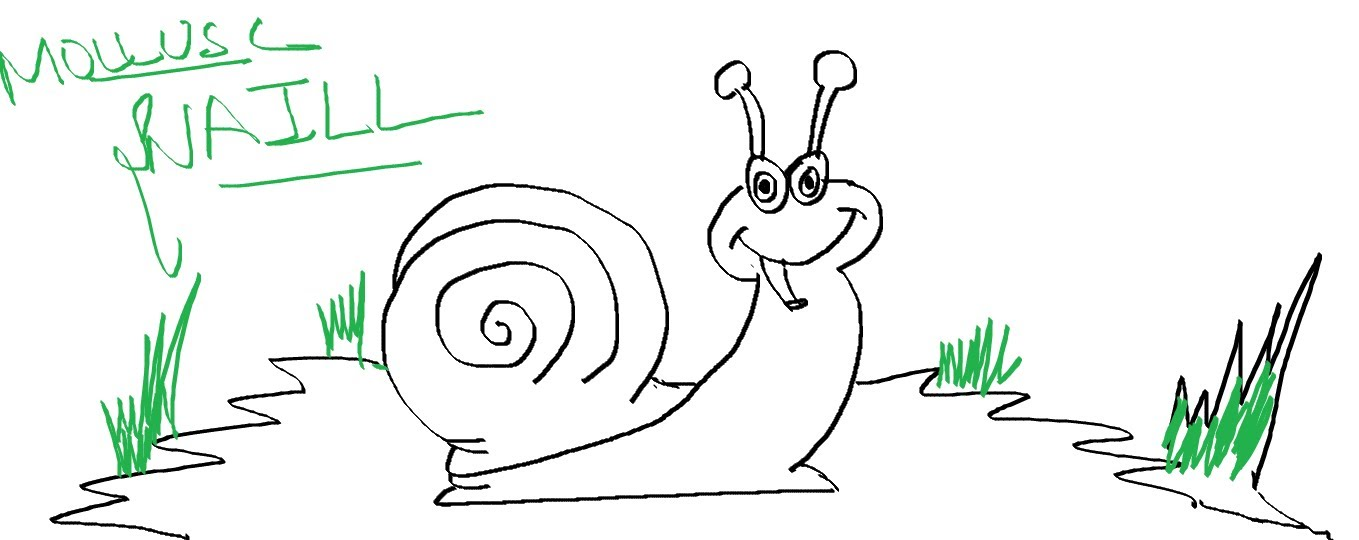 1359x540 Easy Kids Drawing Lessons How To Draw Cartoon Mollusc Snail