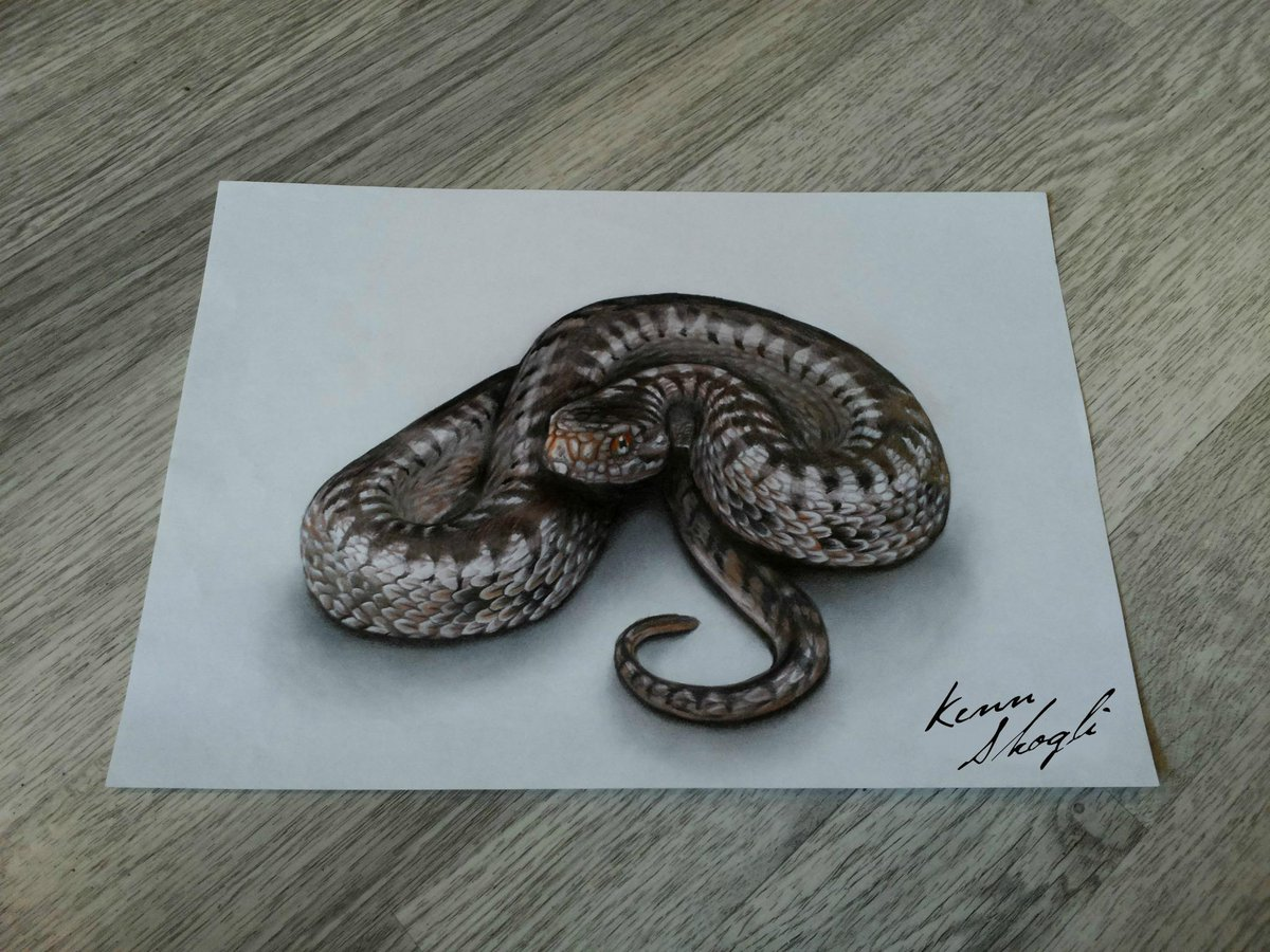 1200x900 Kenn Skogli On Twitter 3d Snake