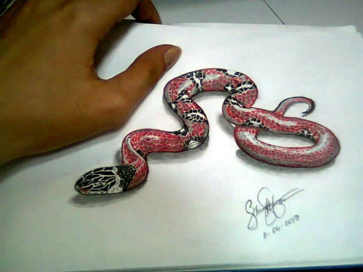 736x552 Beautiful Snake Drawings