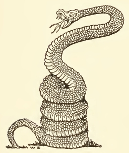 256x304 FileCoiled Snake Drawing.jpg