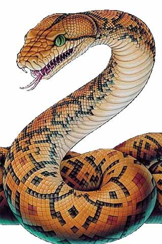 320x480 How To Draw Snake Animals For (Android) Free Download On Mobomarket
